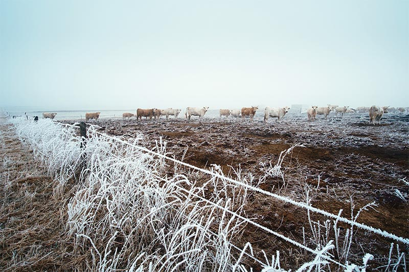 Cold Weather Farming - Cold Weather Farming