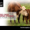 TC Wordpress Calving 100x100 - Calving Season: Your Preparation Checklist