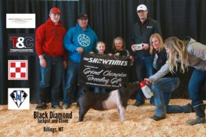 Gilt Grand Champion Brynlee McNally copy 300x200 - Town & Country Supply Association Announces Jackpot Award Recipients