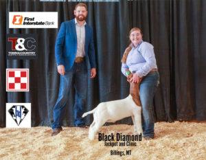 Goat Grand Champion Lexy Dietz copy 300x233 - Town & Country Supply Association Announces Jackpot Award Recipients
